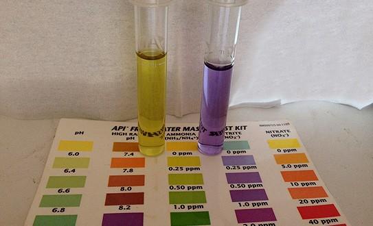 تست آمونیاک در آکواریوم آب شور