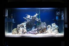 تنها ماهی با سنگ زنده