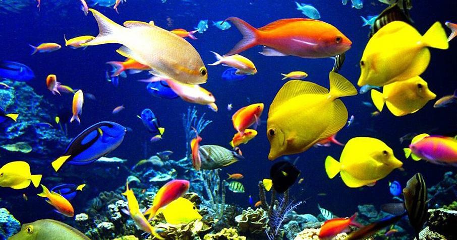 گونه هایی از ماهی های آب شور سازگار