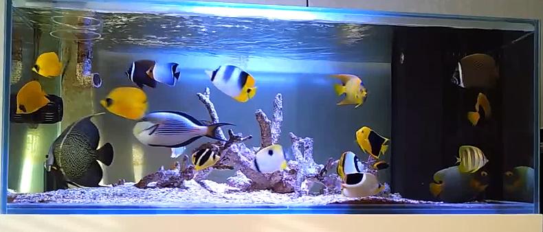 آکواریوم تنها ماهی
