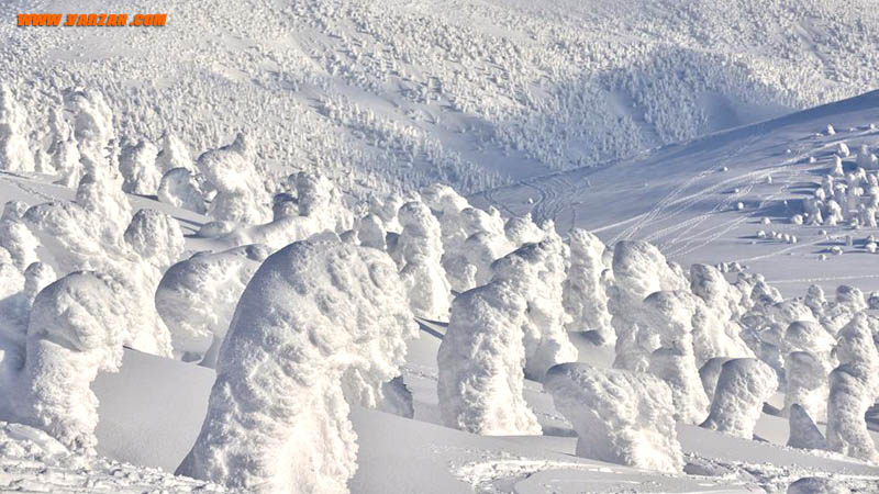 درختان یخ زده شبیه هیولاهای برفی