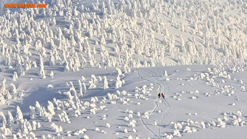 جنگل هیولاهای برفی