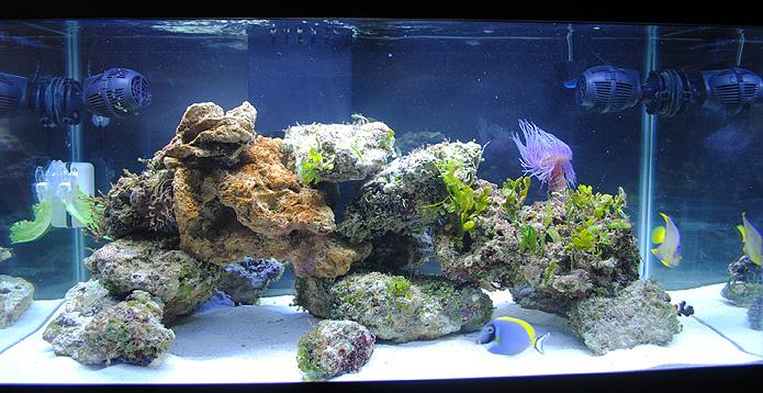 آکواریوم تنها ماهی با سنگ زنده
