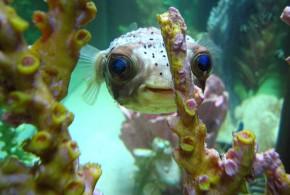 ماهی آب شور پراسترس